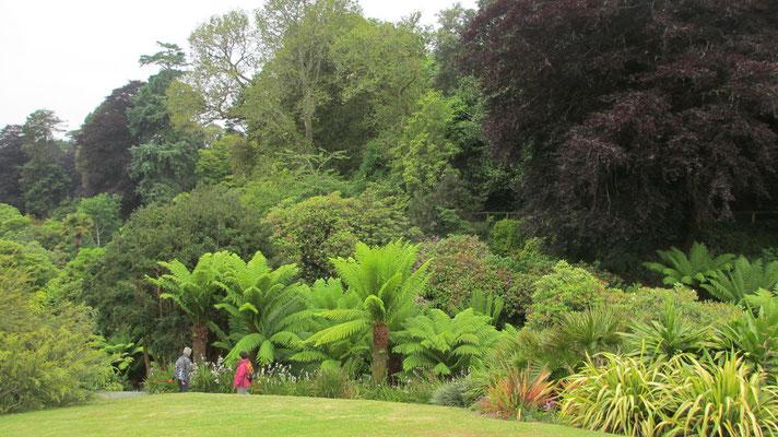 Mittwoch: Am Nachmittag Besuch des Trebah Naturgartens.