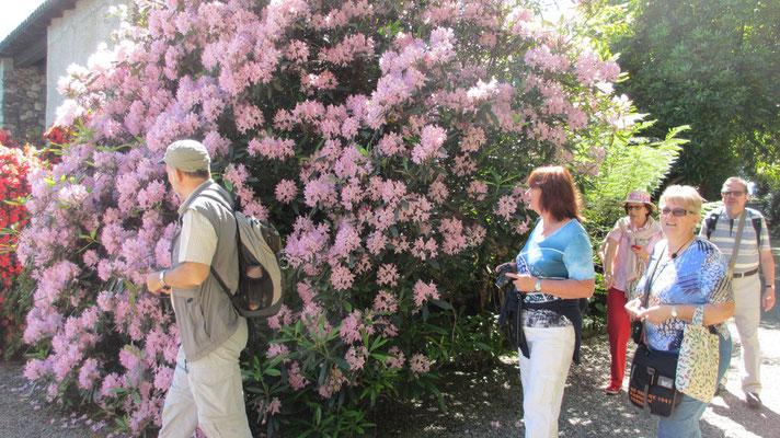 Dienstag: Botanischer Garten auf der Isola Madre im Lago Maggiore