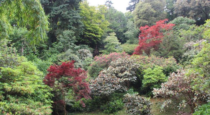 Mittwoch: Rundgang durch den Trebah Garten (2 von 6).