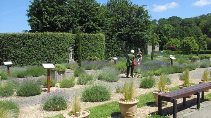 Freitag: Spaziergang durch den Lavendel-Garten des Buckfast Abbey.