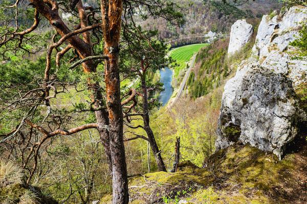 Donautal bei Beuron 2019