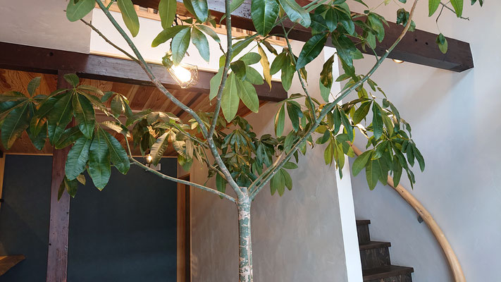 令和元年公募型木のまちづくり事業