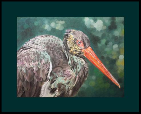 Tierzeichnung, Vogelzeichnung, Vogelmalerei, Tiermaler, Schwarzstorch, Tierportrait, Zeichnung, Pastellzeichnung