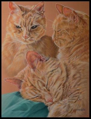 Katzenzeichnung, Tierzeichnung, Tiermalerei, Katzenmalerei, Katze, Katzenportrait, Tigerkatze, Zeichnung, Pastellzeichnung