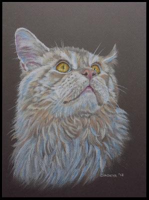 Katzenzeichnung, Tierzeichnung, Tiermalerei, Katzenmalerei, Maine Coon, Katzenportrait, Zeichnung, Pastellzeichnung