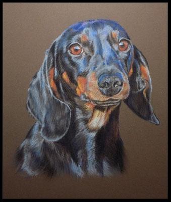 Hundezeichnung, Tierzeichnung, Hundemalerei, Dackel, Hundeportrait, Zeichnung, Tiermalerei, Pastell