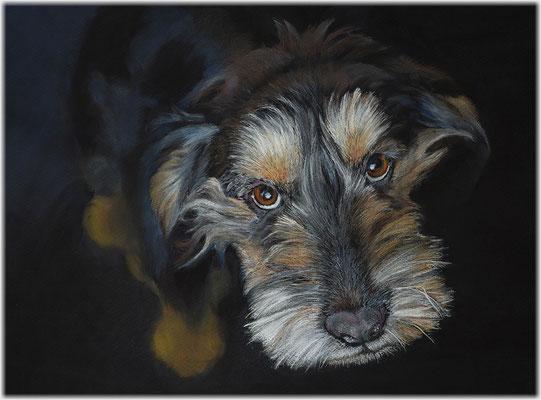 Hundezeichnung, Tierzeichnung, Hundeportrait, Pastellzeichnung, Tiermalerei, Mischling, Zeichnung, Pastellzeichnung