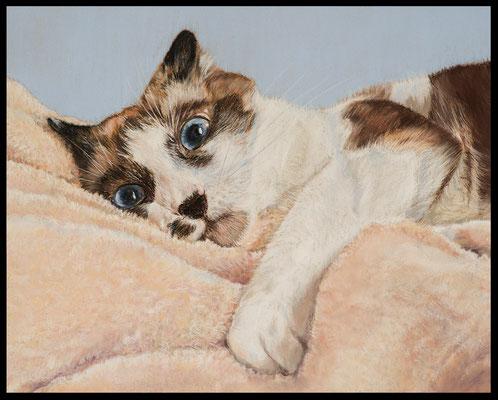 Katzenzeichnung,Tierzeichnung,Katzenportrait,Pastellzeichnung