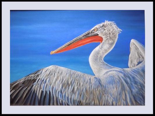 Tierzeichnung, Vogelzeichnung, Krauskopfpelikan, Pastellzeichnung, Tierportrait, Vogelportrait