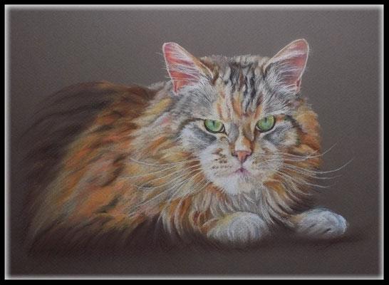 Katzenzeichnung,Tierzeichnung,Katzenportrait,Maine Coone,Pastellzeichnung