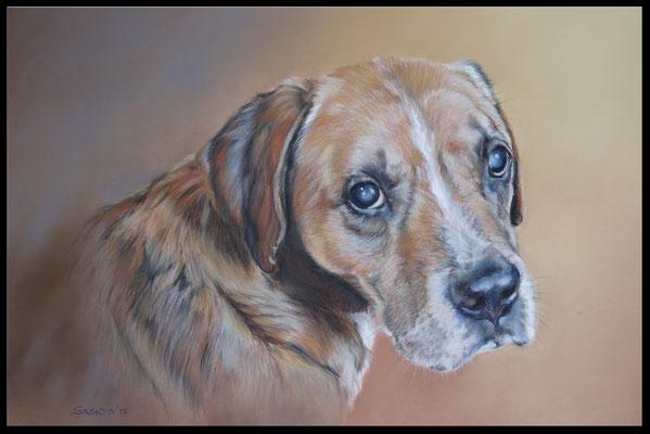 Hundezeichnung, Tierzeichnung, Tiermalerei, Hund, Hundeportrait, Boxer, Pastellzeichnung, Zeichnung