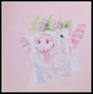Tierzeichnung,Tierportrait,Ferkel,Schwein,Pastellzeichnung