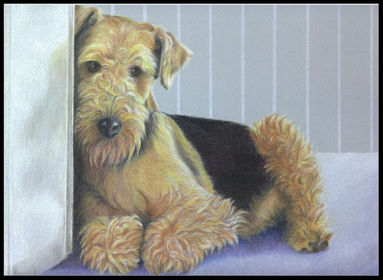 Hundezeichnung, Airdale Terrier, Hundeportrait,  Hund, Zeichnung, Farbstift, pet portrait, dog portrait, coloured pencil drawing