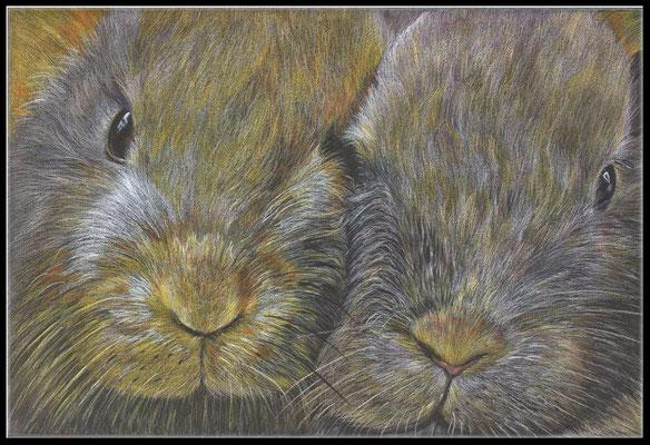Tierzeichnung,Tier Zeichnung,Kaninchen,Farbstift Zeichnung