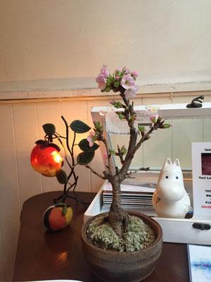 桜の盆栽が置いてあります。