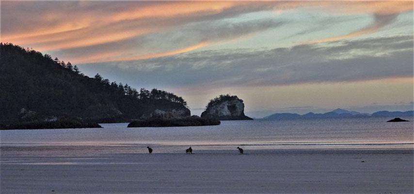 ....diese Tiere bei Sonnenaufgang....