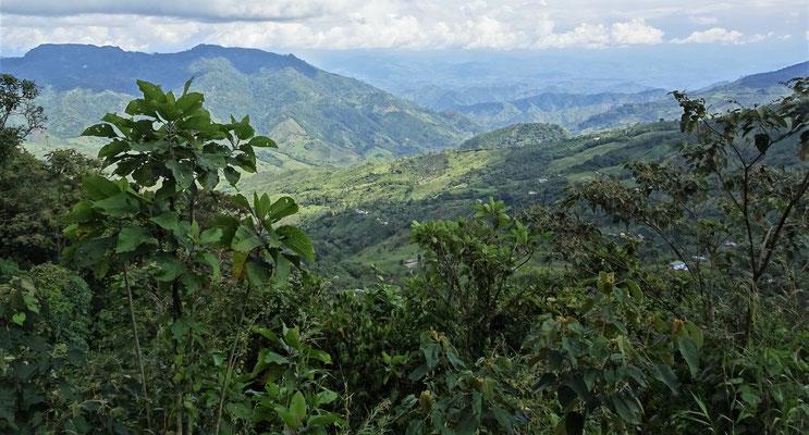 Die grüne Hügellandschaft auf dem Weg......
