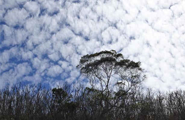 Wieder diese Wolken auf dem Weg......
