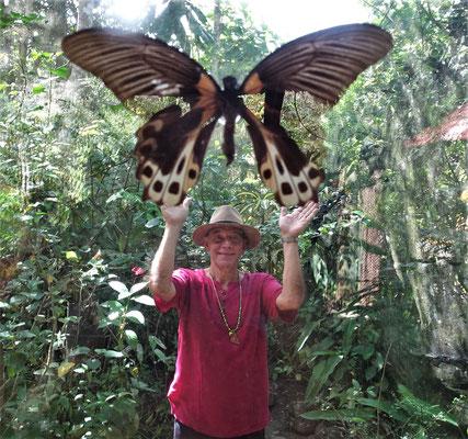 Das ist aber ein grosser Schmetterling.