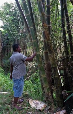Hermus macht Bambusmusik....