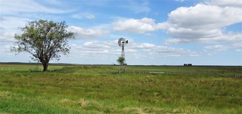 Riesige Weiden auf dem Weg nach Yapeyu.