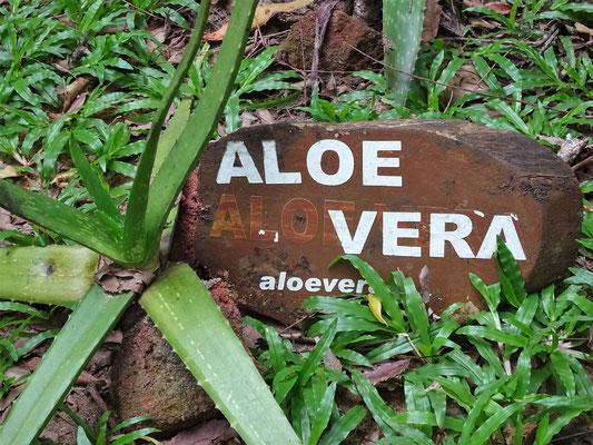 Im Kräutergarten wurde uns die ayurvedische Medizin erlätert.