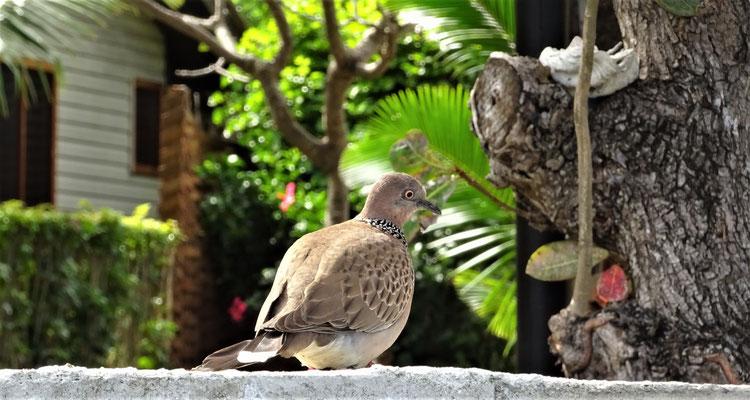 ....und Tauben.