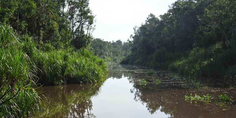...der Flusslandschaft.