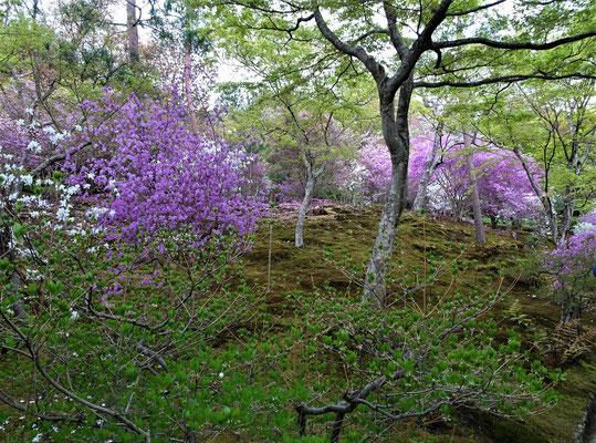 ....Tenryu-ji Tempel mit.....