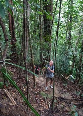 ....durch den heissen Dschungel führte.