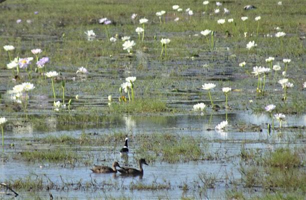 .....vielen Wasservögel.