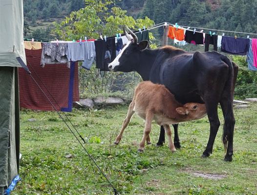 Auch unser Nachbar hat Hunger