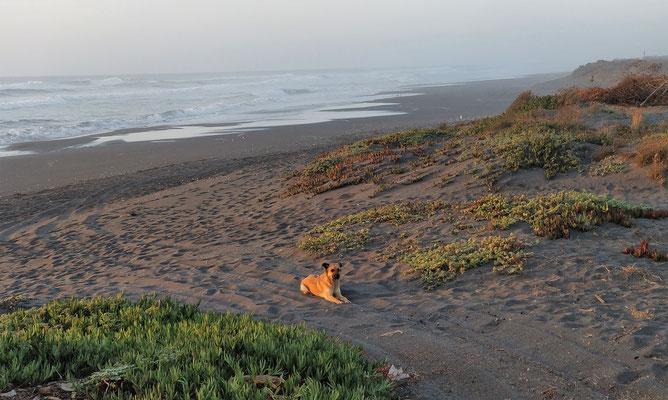 .....schwarzem Sand.....