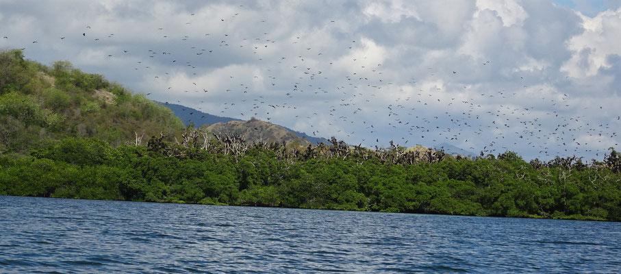 ....die Insel mit den Flughunden....