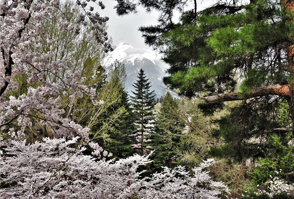 .....Mt. Iwaki der noch Schnee hat.