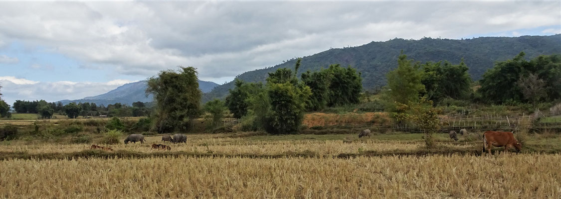 Reisfelder auf.....