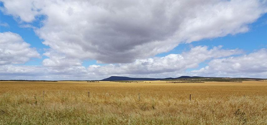 .....an unendlichen Kornfeldern vorbei.