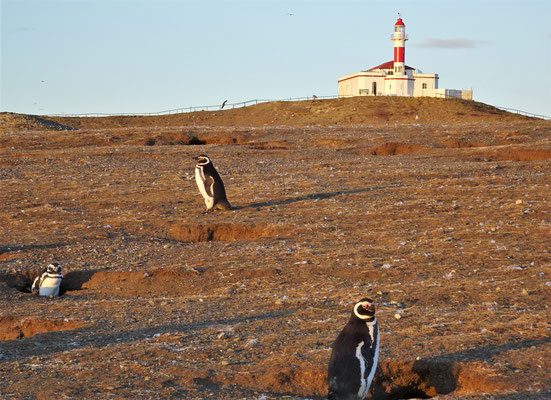 .....unzählige Pinguine.