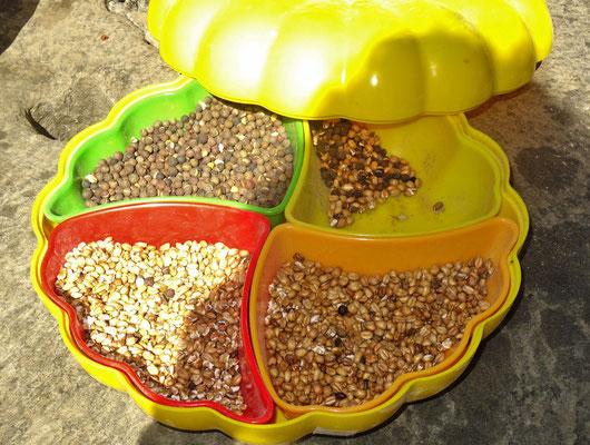 Die Gerstensorten (geröstet schmecken sie auch gut)