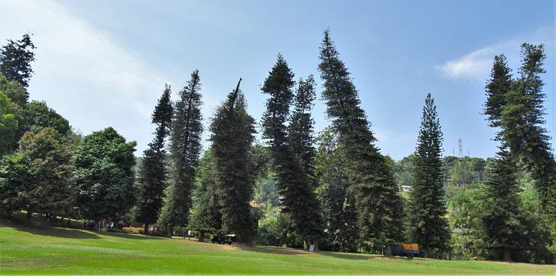 Diese Bäume haben zu viel Bier getrunken.