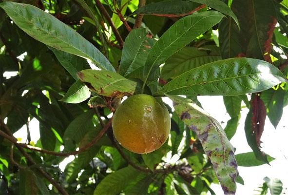 Die Egg Fruit (Eier Frucht)