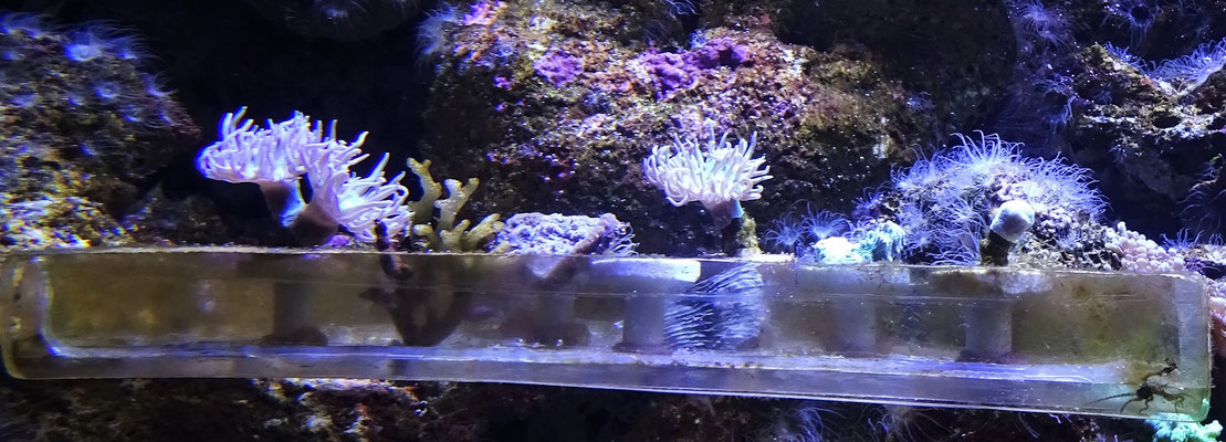 Hier werden Korallen gezüchtet.