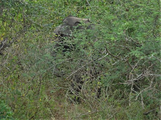 Wo ist der Elefant.