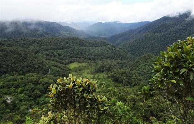 ......durch den Dschungel....