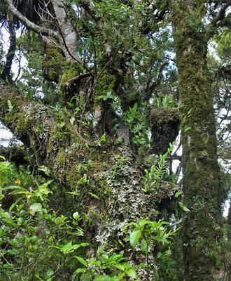 Fast undurchdringliche Dschungel.....