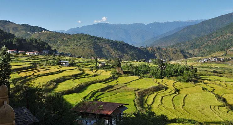 Die Sicht auf die Reisfelder...