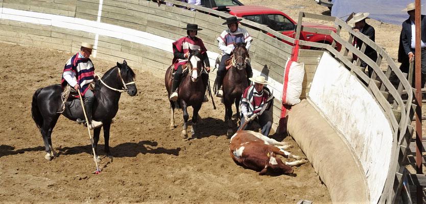 ....mit dem Pferd auf die Polsterung gedrückt werden.