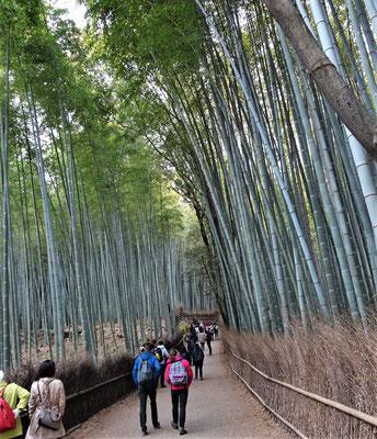 Der Bambushain in Arashiyama.....