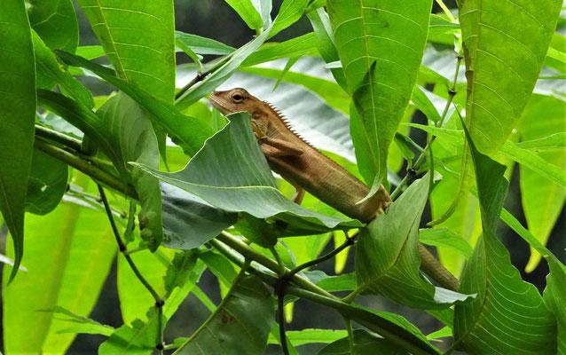 Er war im Baum vor unserem Bungalow.