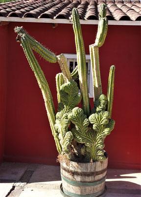Ein spezieller Kaktus.....